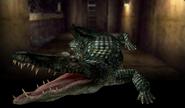 Alligator Survivor