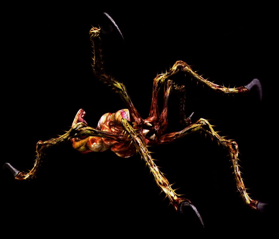 Arañas (Bui Kichwa)