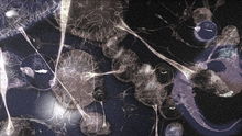 Virus Fusion 3.png