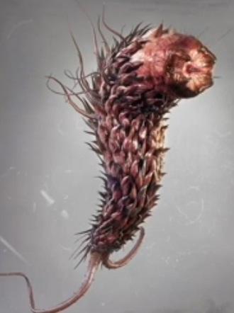 Plagas Cultivadas