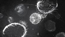 Virus Fusion 1.png