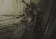 RE7 Insect