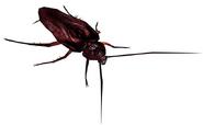 RETDC Cockroach
