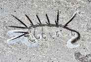 Shale-worm 500