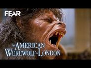 Iconic Wolfman Transformation Scene - An American Werewolf In London