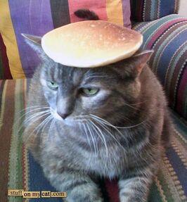 Pancake-cat-738537.jpg
