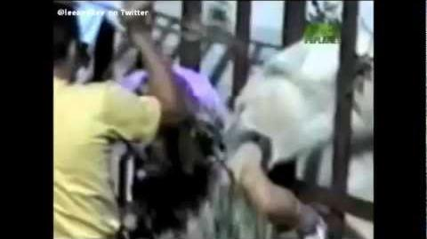 Animal_Attacks_Caught_On_Video