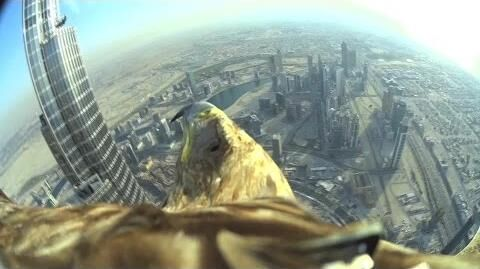 Dubai_World_Record_Eagle_Flight