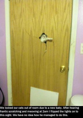 Kitten power.jpg