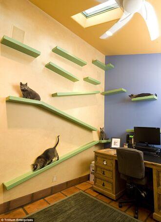 Kitty-Paradise-Office.jpg