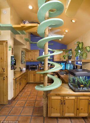 Cat-Paradise-Kitchen.jpg