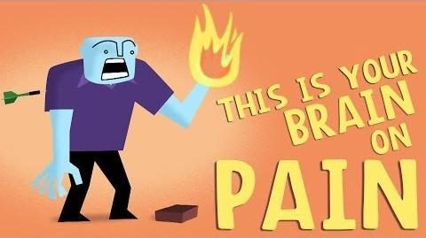 How_does_your_brain_respond_to_pain?_-_Karen_D._Davis