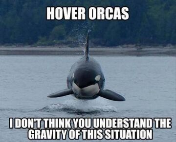 Hover orcas.jpg