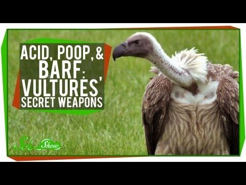 Acid,_Poop,_and_Barf-_Vultures'_Secret_Weapons