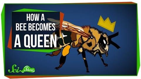 How_a_Bee_Becomes_Queen
