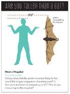 Taller than a bat 4501