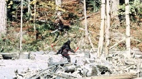 Patterson-Gimlin_Bigfoot_Film_analysis._4K_stabilised_colour.