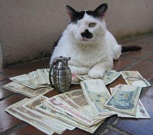 Feline Mafiosa .jpg