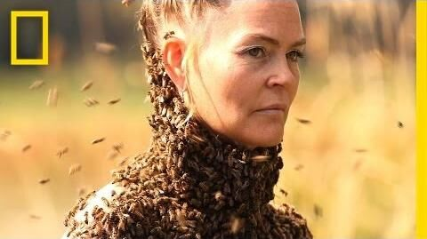 She_Dances_With_10,000_Bees_on_Her_Body_-_National_Geographic
