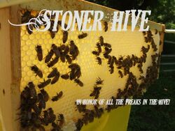 Stoner Hive.jpg