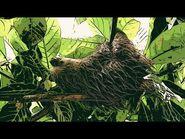 Boss Keloid - Gentle Clovis (Official Music Video) - Ripple Music