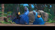 Meet toucan family