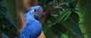"""Crazy love bird"""