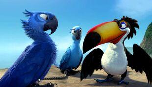Blu-Bobo-Jewel-rio-movie-wallpaper