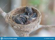 Newborn-baby-birds-nest-tree-newborn-baby-birds-nest-tree-nature-126594959