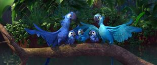 640px-Blu and jewel with chicks by jharuccaninja04-d3h92c1