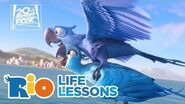 Rio Life Lessons - Fox Family Entertainment