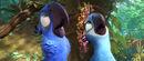 Blu and Jewel starring up