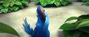 Blu looking at jewel