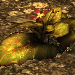 Pflanzen (Risen)