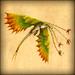 Leafy Snaptrapper - FB.png