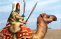 Elite Camel Warrior