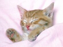 Что снится кошкам.jpg