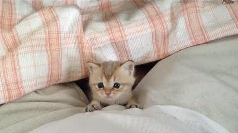 とても人懐こい赤ちゃん猫 baby cat so cute!