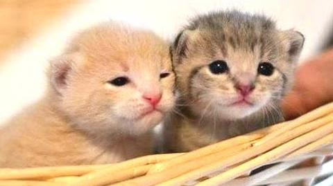 Cute Kittens Compilation 2015 NEW