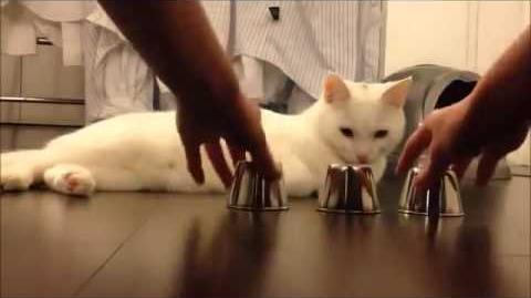 Самая умная кошка в мире)))))))