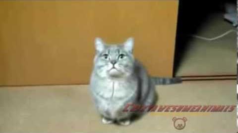 Самые умные коты