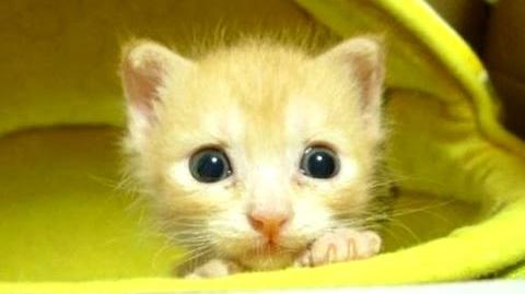 Cute Kittens Compilation -- NEW HD