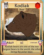 Bear thing