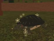 Turtleparticles