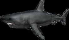 Shark Bite Roblox-11.png