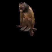 Dexter monkey.png
