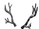 Catalog:Silverthorn Antlers