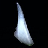Shark Fin topper icon