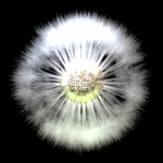 Dandelion Seed antenna icon.png