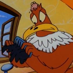 American Balding Eagle